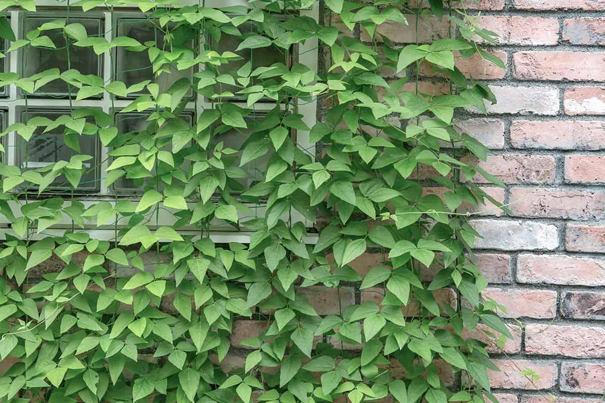 グリーンカーテン,効果,植物,設置,注意