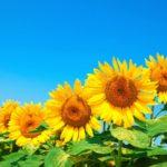 盛夏の候 時候の挨拶 読み方 意味 例文