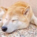 犬,熱中症,原因,症状,応急処置