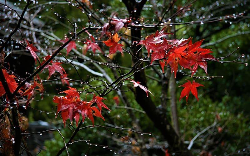 秋雨の候 時候の挨拶 読み方 意味 例文