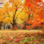晩秋の候 時候の挨拶 読み方 意味 例文