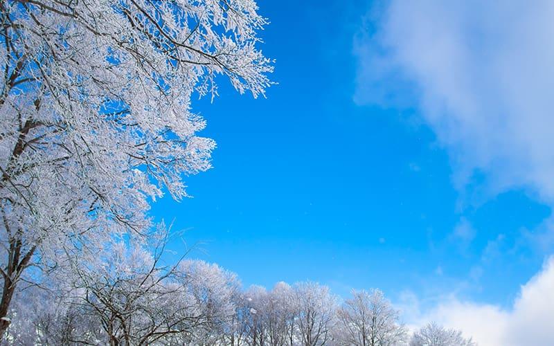 極寒の候 時候の挨拶 読み方 意味 例文