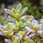 初霜の候 時候の挨拶 読み方 意味 例文