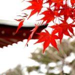 季秋の候 時候の挨拶 読み方 意味 例文