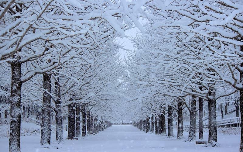 向寒の候 時候の挨拶 読み方 意味 例文
