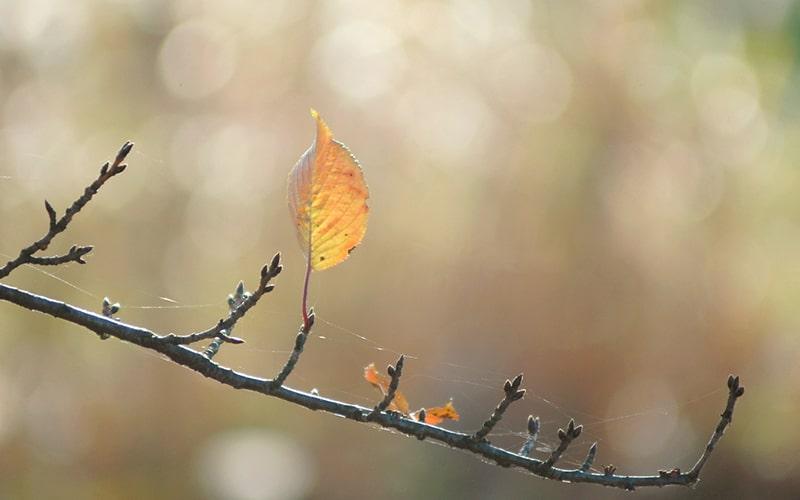 落葉の候 時候の挨拶 読み方 意味 例文
