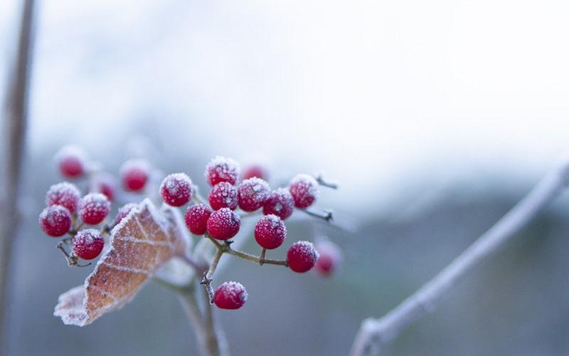 霜秋の候 時候の挨拶 読み方 意味 例文
