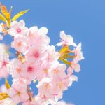 季春の候 時候の挨拶 読み方 意味 例文