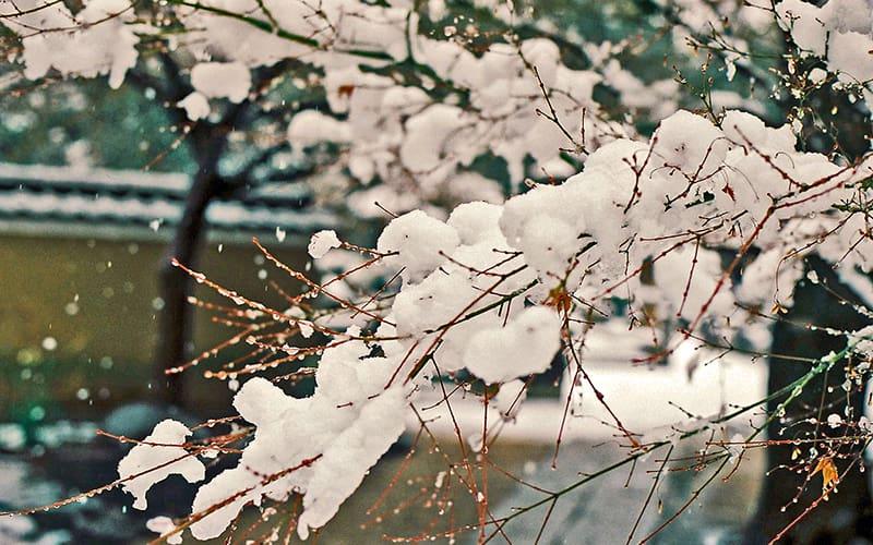 降雪の候 時候の挨拶 読み方 意味 例文