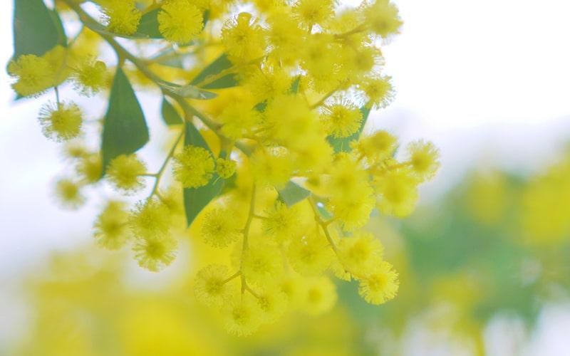 向春の候 時候の挨拶 読み方 意味 例文