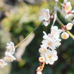 立春の候 時候の挨拶 読み方 意味 例文