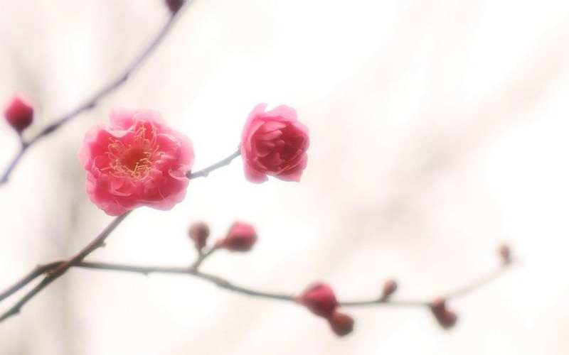 初春の候 時候の挨拶 読み方 意味 例文