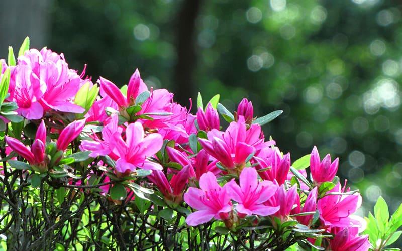 春日の侯 時候の挨拶 読み方 意味 例文